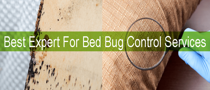 Best Expert For Bed Bug Control Services